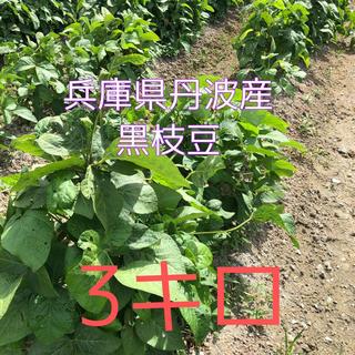 丹波産 黒枝豆 3キロ 期間限定(野菜)
