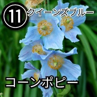 【ポピー⑪】コーンポピークイーンズブルー 種子30粒(その他)