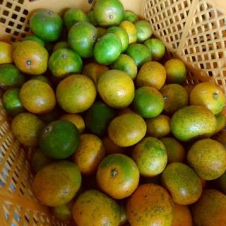 極早生みかん(肥のあかり) 約5キロ(フルーツ)