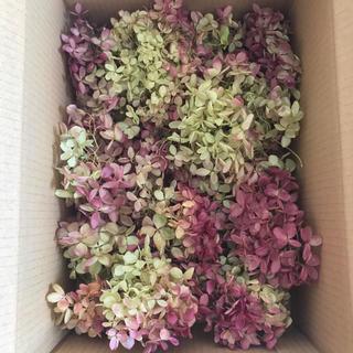 シーズンラスト ミナヅキ ヘッド ドライフラワー80サイズ箱 花材 リース う(ドライフラワー)