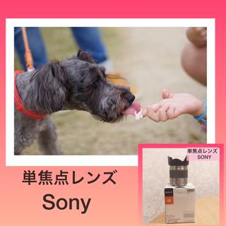 SONY - Sony レンズ Eマウント selE50F18 単焦点レンズ カメラ