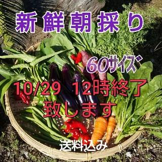 新鮮朝採り【野菜おためし♪おまかせセット】柚子(野菜)
