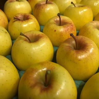 \✩/数量限定\✩/ 幻のりんご アキタゴールド  約5kg(フルーツ)