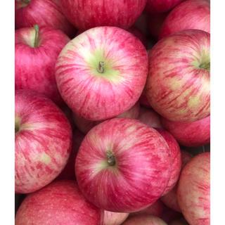 青森県産りんご ジョナゴールド訳あり約10kg(フルーツ)