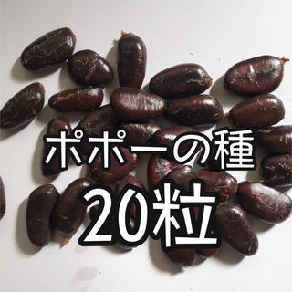 ポポーの種 20粒 トロピカルでクリーミーな幻のフルーツ(フルーツ)