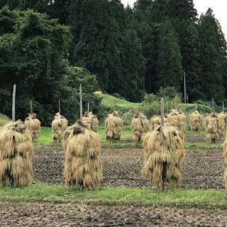 岩手県産 ひとめぼれ 20キロ (10キロ×2袋) 米 白米 玄米 昨年度産(米/穀物)