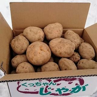 じゃが芋とうやB品 超特大玉 10キロ箱 農家直送