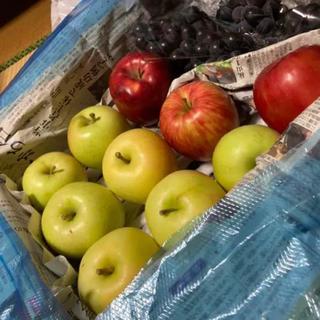 青森県産もぎたてリンゴとブドウ(フルーツ)