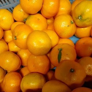 和歌山 みかん 訳ありS~2L 混合 大量 10kg(フルーツ)