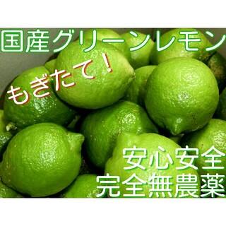 完全無農薬栽培 ノーワックス 国産レモン グリーンレモン 無農薬レモン レモン(フルーツ)