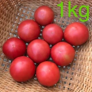 産地直送 減農薬 小玉トマト 桃太郎 約3kg はねだし 訳あり
