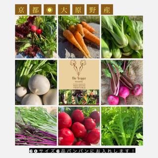新鮮野菜セット 京都無農薬野菜 露地栽培野菜をお届け!おまけ付き