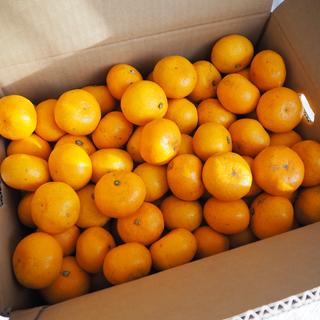 🔥ご購入前にコメントお願い致します🔥和歌山県産 有田みかん 家庭用 10kg(フルーツ)