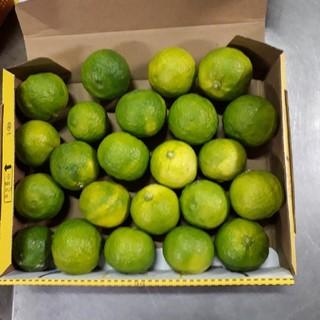 国産 無農薬 青柚子 ゆず 1.0kg 送料無料(フルーツ)