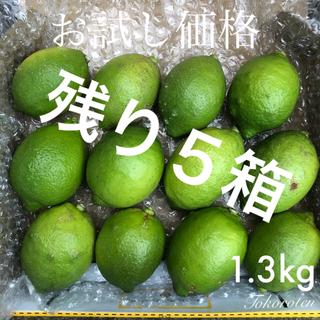 『本日限定‼︎』山口県産 レモン 1.3kg(フルーツ)