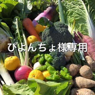 野菜BOX Lサイズ ぴよんちょ様専用(野菜)