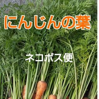 新鮮朝採り【ニンジンの葉】ネコポス専用(野菜)