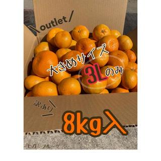 【訳あり】大玉 みかん 《3Lのみ》 8kg *福岡立花産* 産地直送(フルーツ)