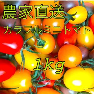 農家直送!採れたてカラフルミニトマト 1kg(箱込) (野菜)
