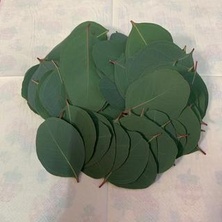 ユーカリ ポポラス 葉のみ 100枚(ドライフラワー)