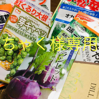 野菜の種子(野菜)