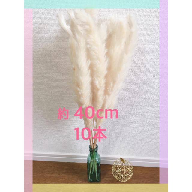 結婚式やお部屋のインテリアに♡ パンパスグラス 約40cm 10 ハンドメイドのフラワー/ガーデン(ドライフラワー)の商品写真