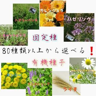 野菜の種 ハーブの種 エディブルフラワー 固定種 有機種子 家庭菜園 水耕栽培(野菜)