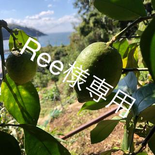 『Ree様専用』山口県産 レモン 5kg(無農薬ではありません)(フルーツ)