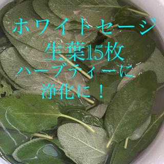 無農薬ホワイトセージ生葉15枚 フレッシュハーブティーに浄化に(茶)