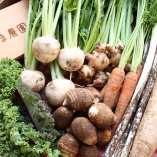 成田産 お野菜詰め合わせ10品Lサイズ(栽培期間中無農薬、無化学肥料)(野菜)