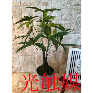 光触媒 人工観葉植物 造花 ウォールグリーン パキラ4033