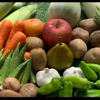 無農薬新鮮野菜果物セット