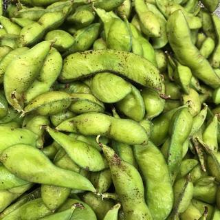 大きくふくらんだ丹波の黒豆の枝豆さやのみ 800グラム  (野菜)