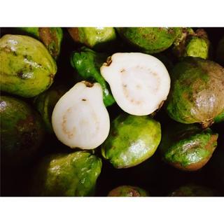 安心のクール便送料込!最終!ほんのり甘くとろける!沖縄産グァバ白果肉 1kg(フルーツ)