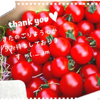 orange様専用ミニトマト1.5キロ(野菜)