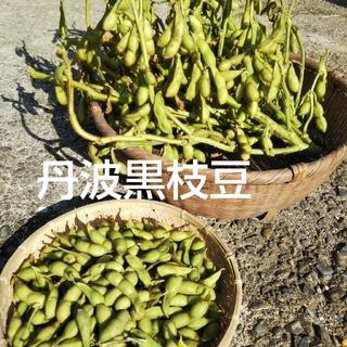 丹波黒枝豆 期間限定(10月末位) 700g ¥1500送料込み(野菜)