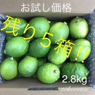『お試し価格‼︎』山口県産 レモン2.8kg (無農薬ではありません!)(フルーツ)