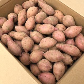 本場!安納地区の安納芋 プチサイズ 5kg