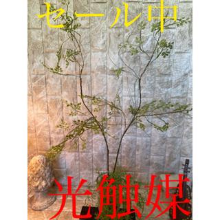 光触媒 人工観葉植物 造花 ウォールグリーン ウォールリーフ