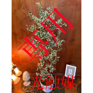 光触媒 人工観葉植物 造花 ウォールグリーン ニューフィカス12347