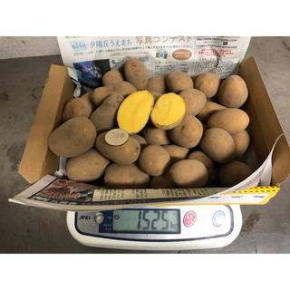 青森県インカの目覚め2Sサイズ1.5kg