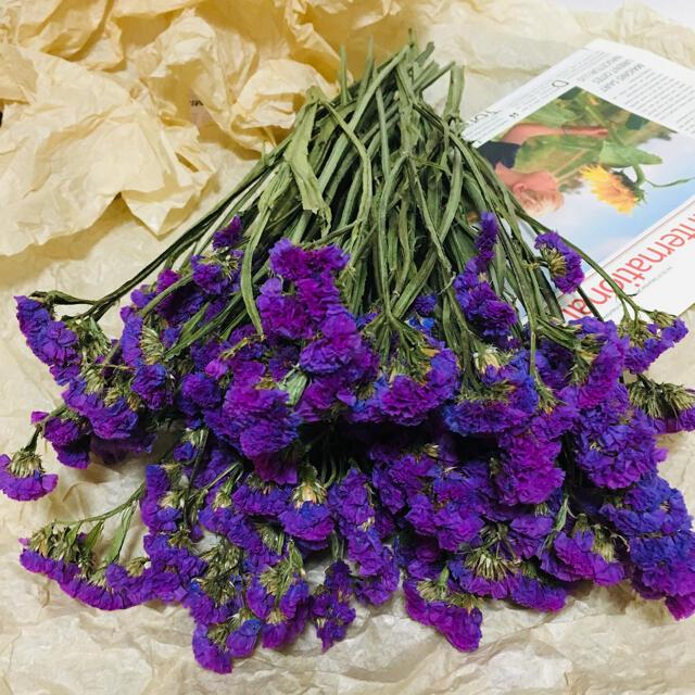 ドライ 濃い紫 スターチス 40本入り ハンドメイドのフラワー/ガーデン(ドライフラワー)の商品写真