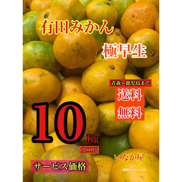 数量限定 特価価格 残り3点 有田みかん 加工用 セール   みかん10kg 食品/飲料/酒の食品(フルーツ)の商品写真
