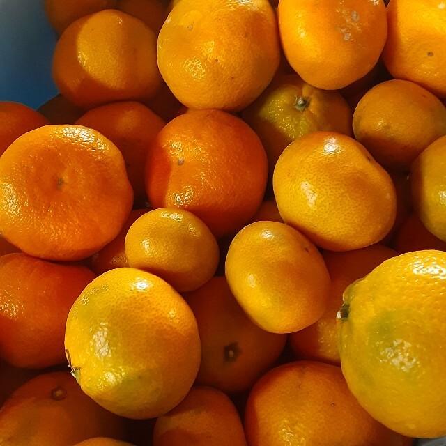 和歌山 みかん 訳あり サイズ混合 S~2L 10kg お買い得 食品/飲料/酒の食品(フルーツ)の商品写真