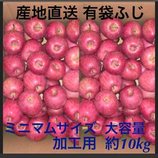 大容量 加工用 有袋ふじ 青森県産 りんご 訳あり 産地直送(フルーツ)