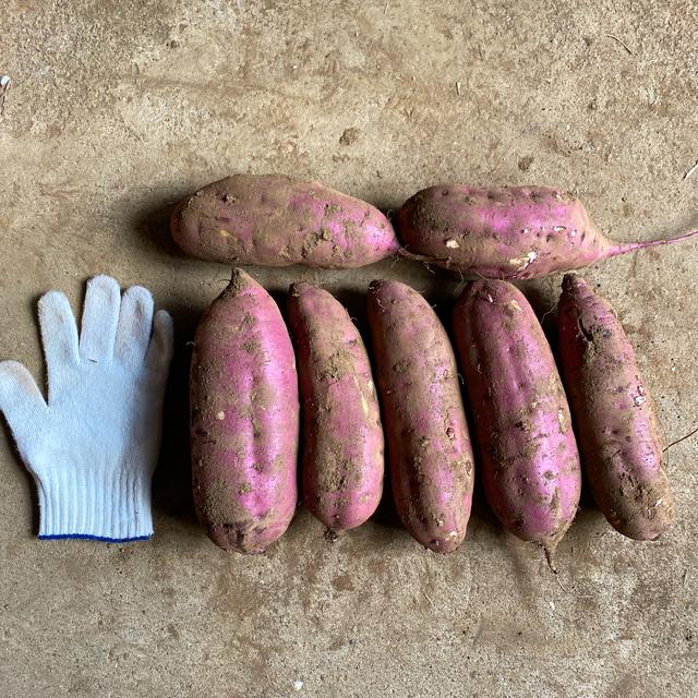紅はるか サツマイモ5キロ(15本前後) 食品/飲料/酒の食品(野菜)の商品写真