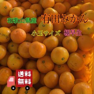 和歌山県産 有田みかん 家庭用 10kg