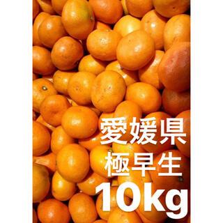 愛媛県産 極早生 みかん 10kg   SS〜3S 小玉