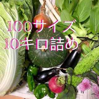 新鮮野菜、農家直送 100サイズ箱満杯詰め(野菜)