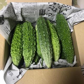 【期間限定】宮崎県産 ゴーヤ 60サイズ